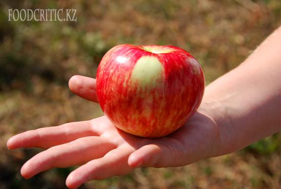 Казахстанское яблоко