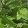 Как хранить зелень